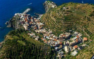 Liguria vineyards