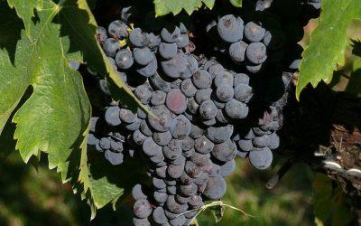 Tre Bicchieri 2019 Previews. Umbria's best wines
