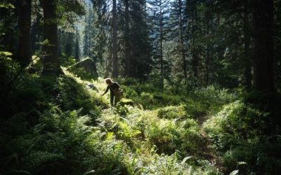 Foraging: The Forest is her Friend