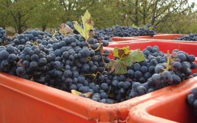 Harvest 2016, Italy maintains world leader ranking, aiming for export records
