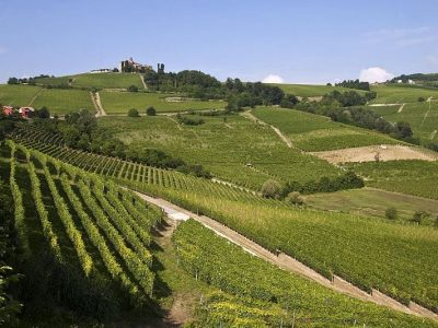 Piedmont's vineyards