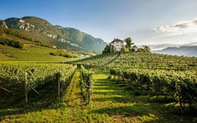 Vinum Hotels: a hotel chain for wine lovers in Alto Adige