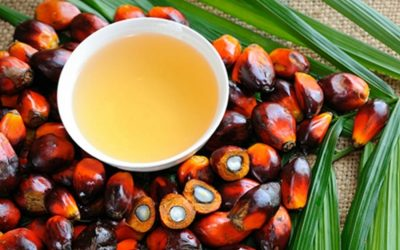 On palm oil: not a health hazard, but companies avoid using it anyway