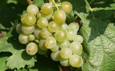 Tre Bicchieri 2019 Previews. Trentino's best wines