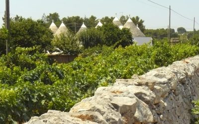 Travel. Puglia Special In the countryside between Bari and Brindisi