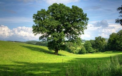 From Bandiera Blu to Spiga Verde: the new environmental recognition for rural areas