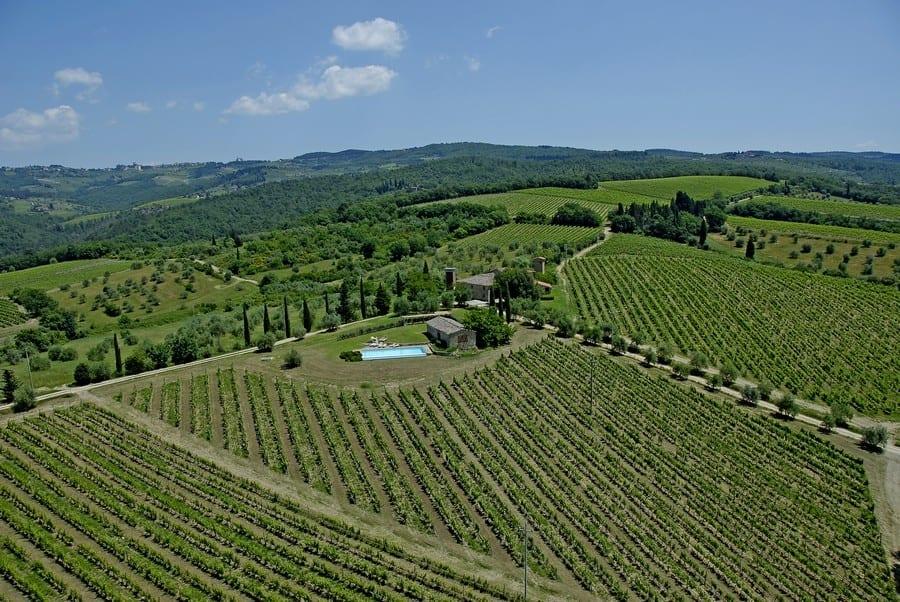 Lilliano vineyards