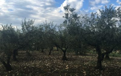 Olio Abruzzo
