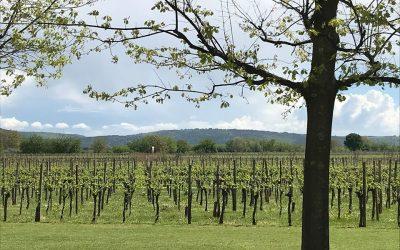 Tenuta Luisa vineyards