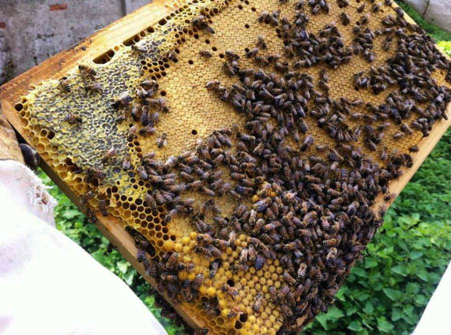 Urbees, progetto di apicoltura urbana