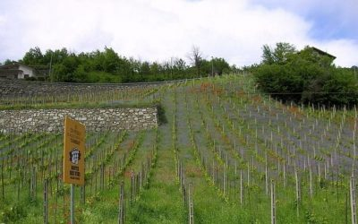 Find out more about the best wines of Valle d'Aosta and Liguria