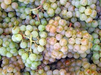 Find out more about the best wines in Alto Adige