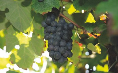 Preview Tre Bicchieri 2021. The best wines of Emilia Romagna