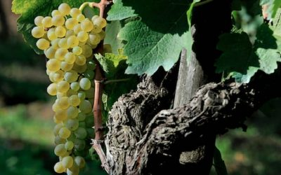 Preview Tre Bicchieri 2021. The best wines of Campania