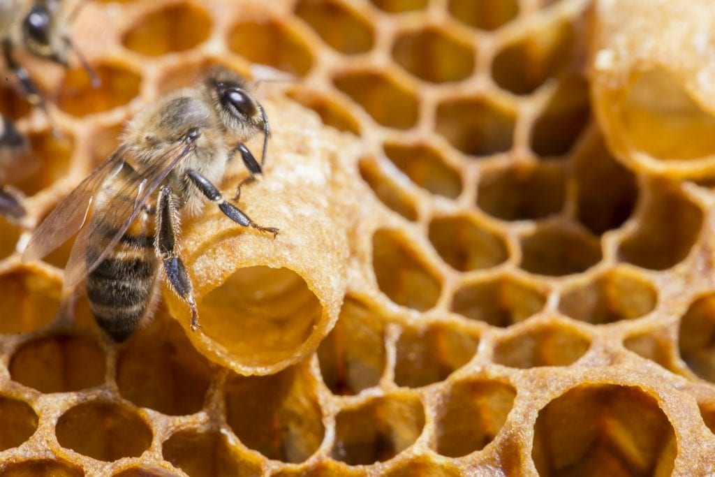 Find out more about pollen, royal jelly, propolis