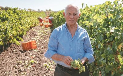 Find out more about Grillo di Sicilia