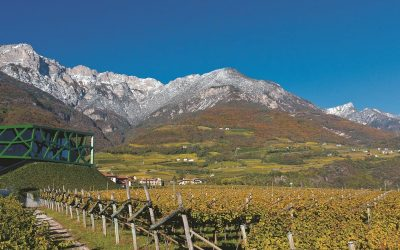 Find out more about traminer