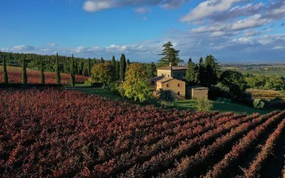 Find out more about Fattoria del Cerro