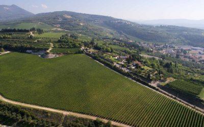 Find out more about Tenuta Piccini