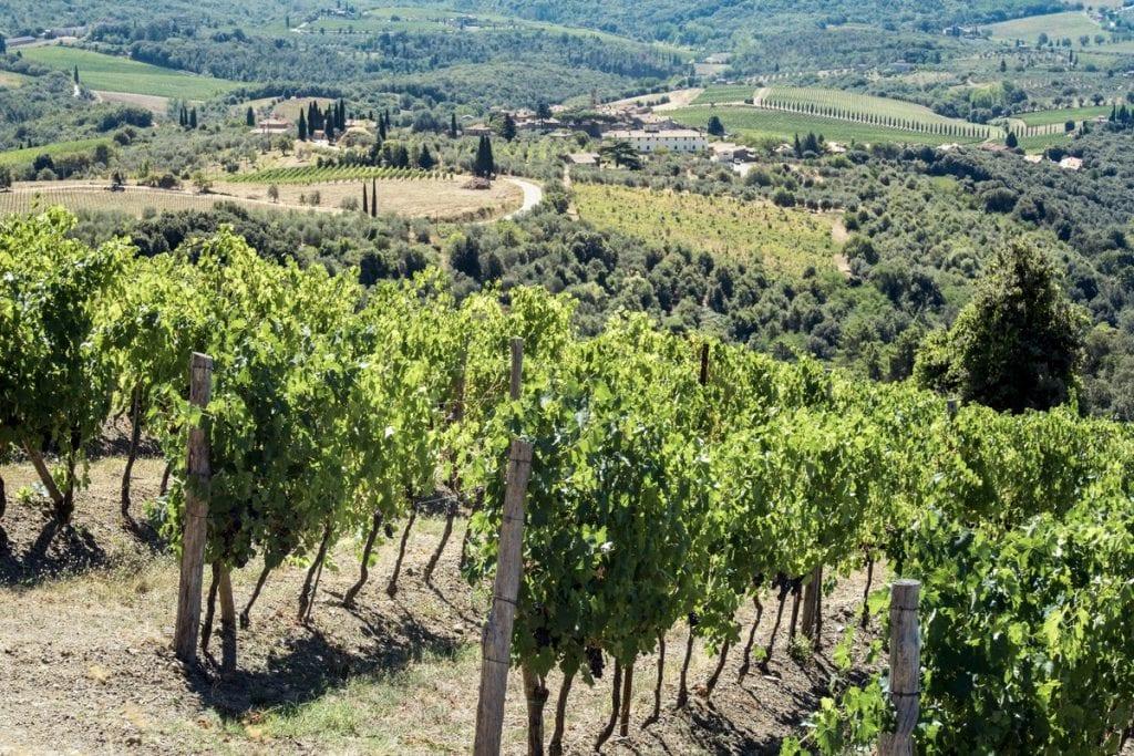 Find out more about tenuta arceno