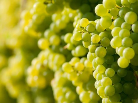 Find out more about Italian grape varieties