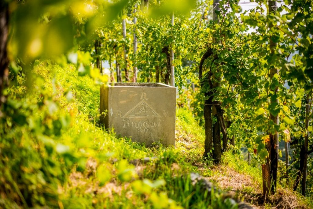 Find out more about the aging of Prosecco