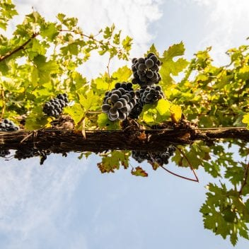 Find out more about bolgheri