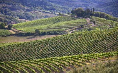 Find out more about Chianti Classico
