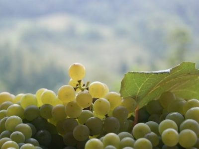 Find out more about Prosecco-Prošek