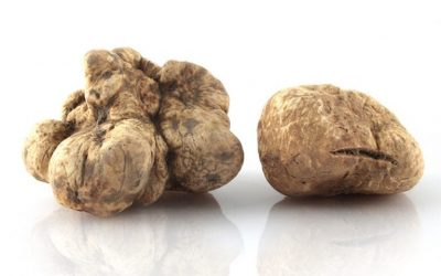 Find out more about truffles