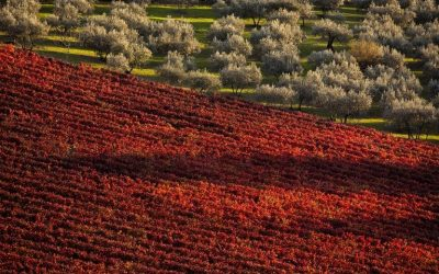 Find out more about Sagrantino's territory, Montefalco