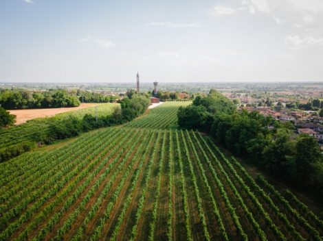 Find out more about Cantina San Michele